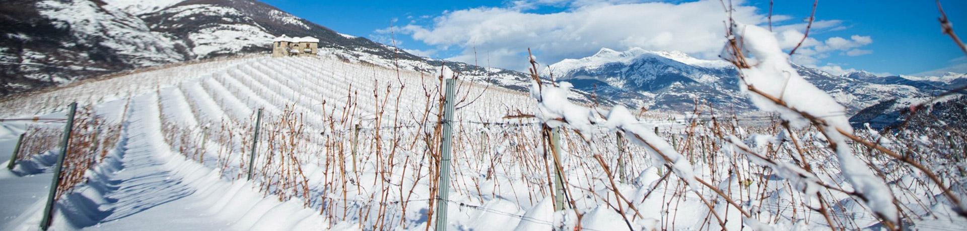 Il nostro inverno: la collina del Côteau innevata e le montagne imbiancate sullo sfondo
