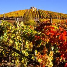 Wine After Wine dedica un articolo a Les Crêtes