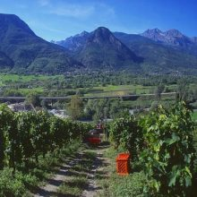 Un weekend in Valle d'Aosta tra cantine e castelli