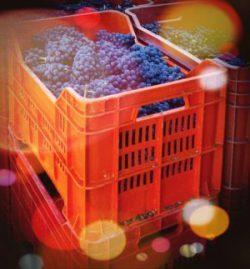 Si parte dal Pinot Nero!